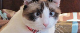 Картинки с красивыми котами (37 фото)