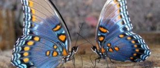 Картинки с бабочками красивыми (35 фото)