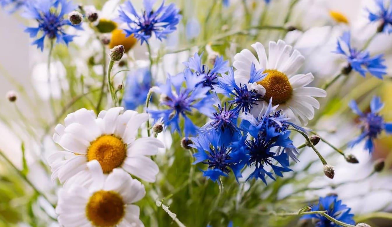 Картинки с полевыми цветочками