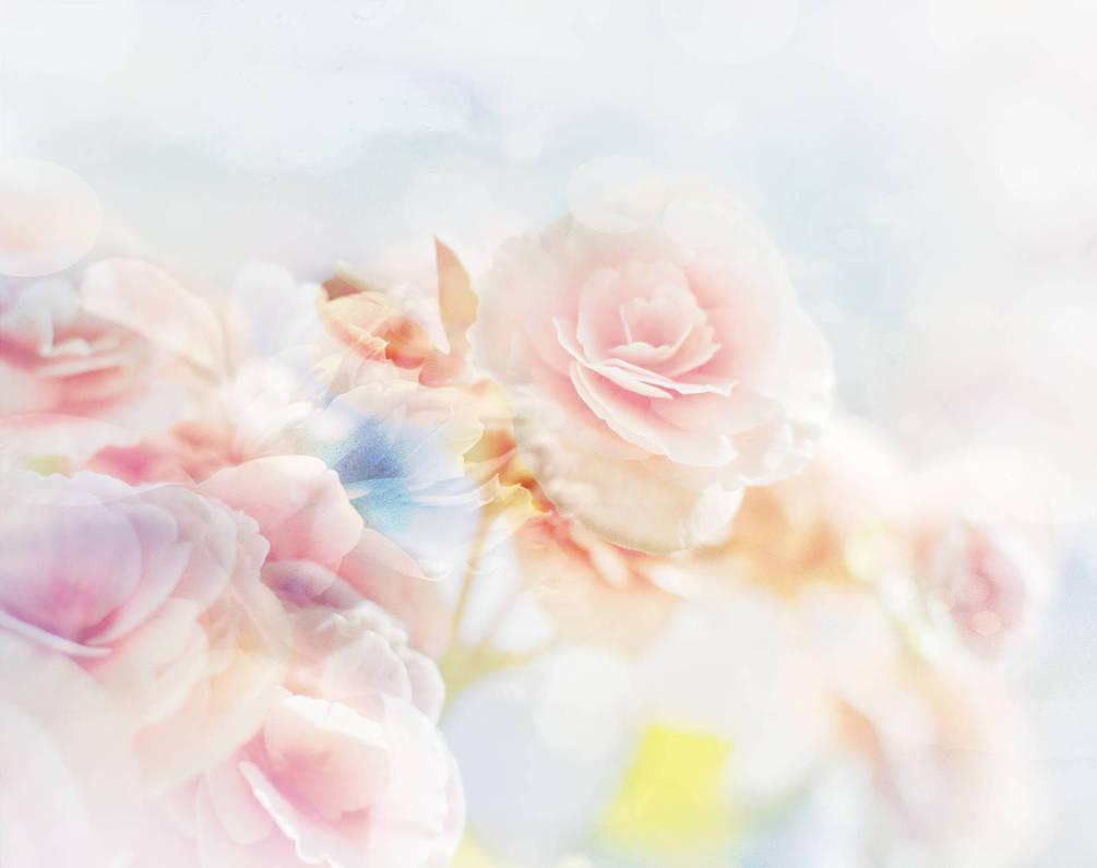 Цветы картинки нежные