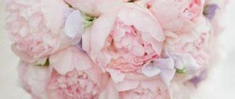 Красивые картинки нежные цветы (38 фото)