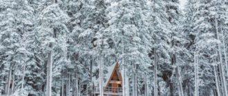Красивые картинки лес (37 фото)