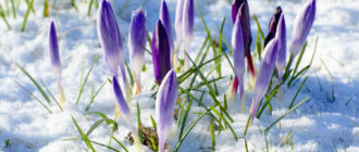 Красивые картинки весна на рабочий стол (35 фото)