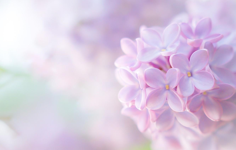 Нежные фиолетовые картинки цветы