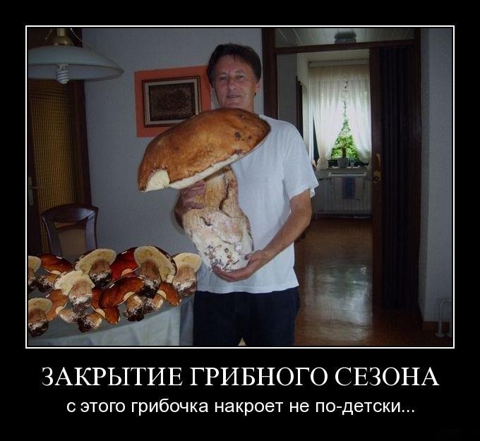 Демотиваторы с грибами