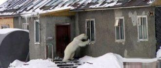 Прикольные картинки про жизнь в России (31 фото)