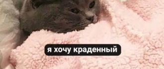 Прикольные картинки про котиков ( 39 фото)