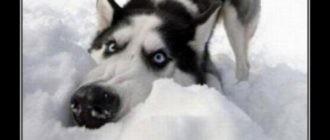 Картинки демотиваторы про животных (37 фото)
