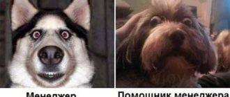 Картинки демотиваторы про работу смешные (37 фото)