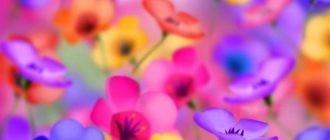 Картинки яркие (41 фото)