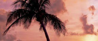 Красивые заставки на телефон с пальмами (41 фото)