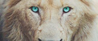 Картинки красивый лев (45 фото)
