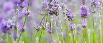 Картинки красивые полевые цветы (40 фото)
