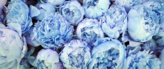 Картинки голубые (43 фото)