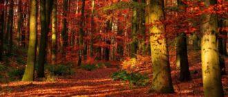 Картинки осенний лес (44 фото)