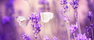 Картинки фиолетовые (54 фото)