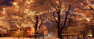 Красивые картинки деревья в гирляндах зимой (35 фото)