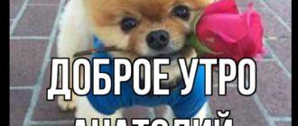 Красивые картинки — Доброе утро, Анатолий! (41 фото)