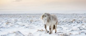 Зимние обои на планшет (44 фото)