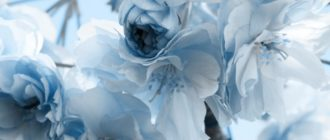 Обои на телефон красивые нежные цветы (45 фото)