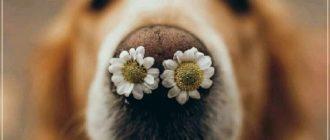 Красивые картинки — Апрельский приветик! (41 фото)