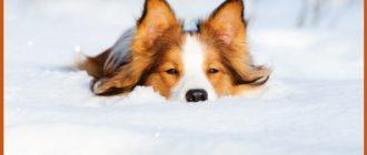 Красивые картинки — С последним днем зимы! (46 фото)