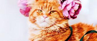 Красивые картинки котики и цветы (40 фото)
