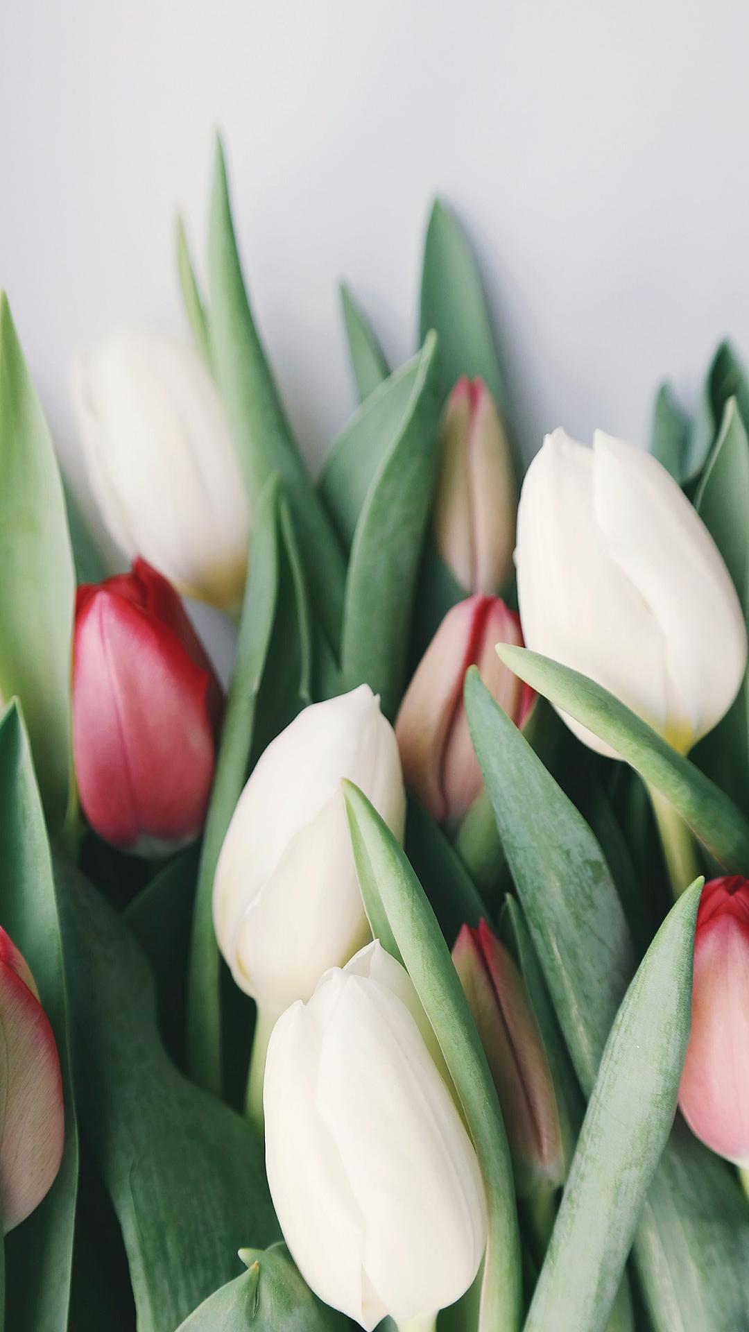 Обои на телефон красивые нежные цветы (45 фото ...  Обои на Телефон Цветы
