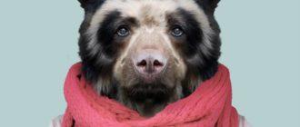 Прикольные картинки на аву с животными (55 фото)