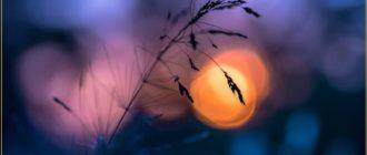 Картинки — Добрый весенний вечер Четверга! (37 фото)