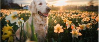 Картинки — Добрый весенний вечер Воскресенья! (35 фото)