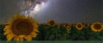 Картинки с пожеланием Доброй летней ночи (40 фото)