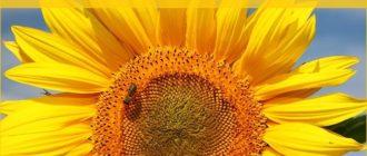 Красивые картинки — Доброе летнее утро Пятницы! (40 фото)